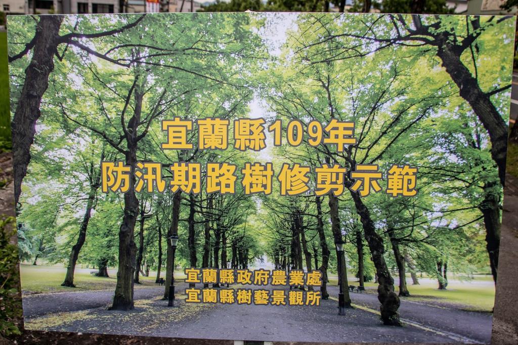 防汛期路樹修剪示範