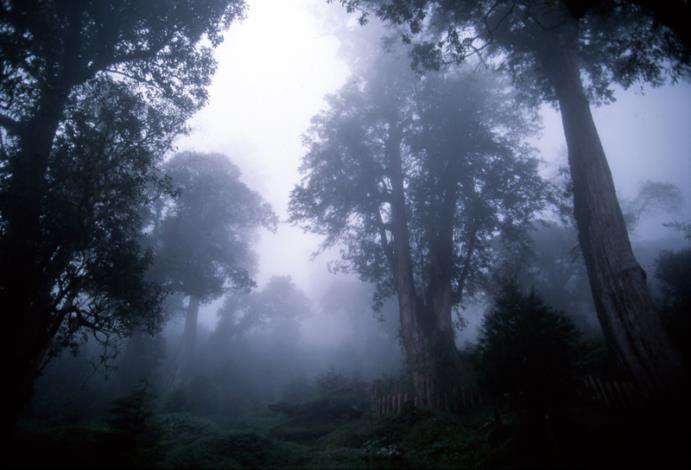 歷代神木園區