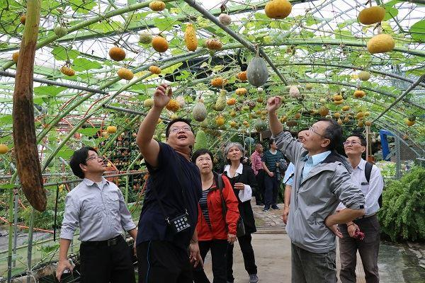 Tourists fill in bee-friendly pumpkin garden
