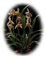 Yilan County Flower