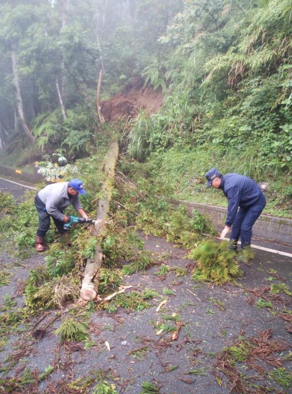 大雨造成路樹倒塌影響交通 三星警協助排除