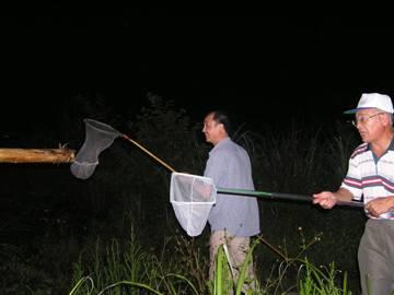 於夜間會同荒野保護協會至長埤湖採集