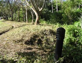 於復育區施以高頻率的除草,讓植物長出嫩芽,以增加蝸牛食源
