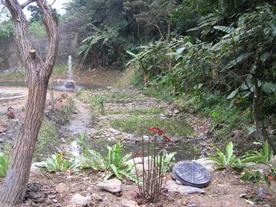 於腦寮溪營造水生黃緣螢復育池,將於四月間野放幼蟲
