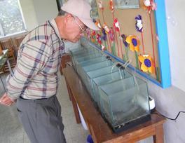 憲明國小進行水生黃緣螢復育工作