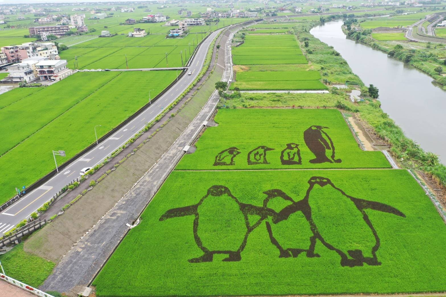 壯圍稻田彩繪(提供的免費非商業使用照片)