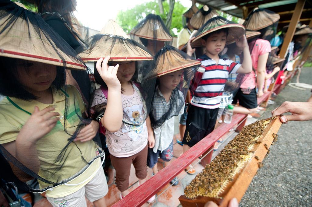 養蜂人家-蜂采館-遊客參加館內蜜蜂導覽活動