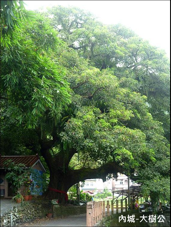 內城-大樹公