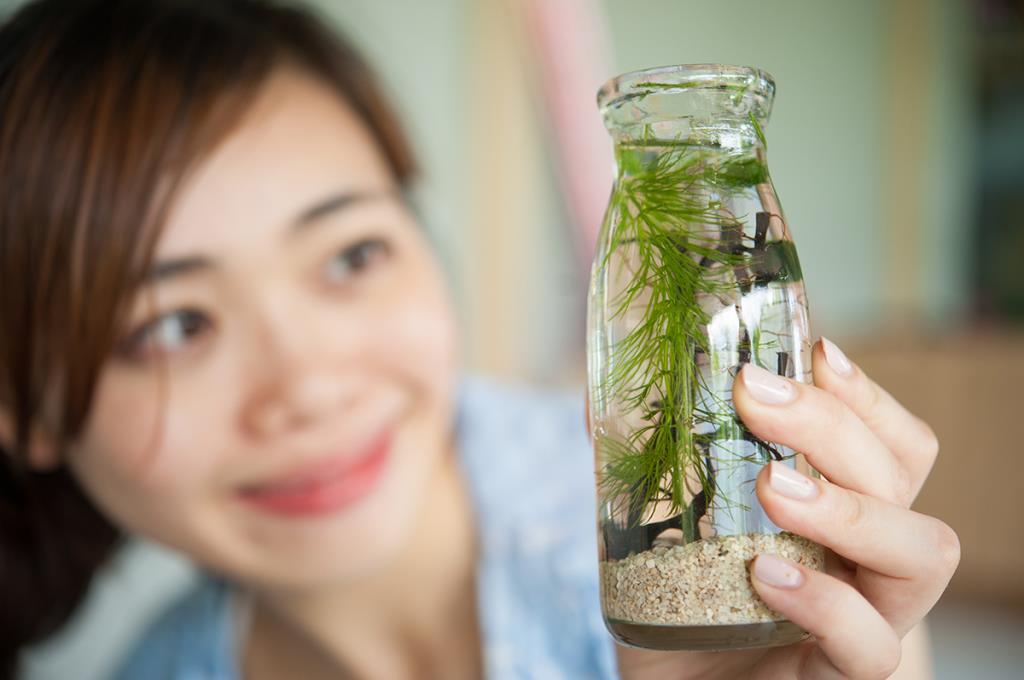 勝洋水草休閒農場-水草生態瓶