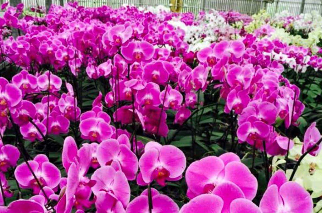 絕美蘭花群
