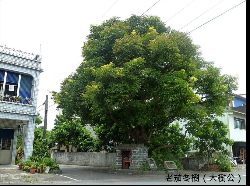 老茄苳樹(大樹公)