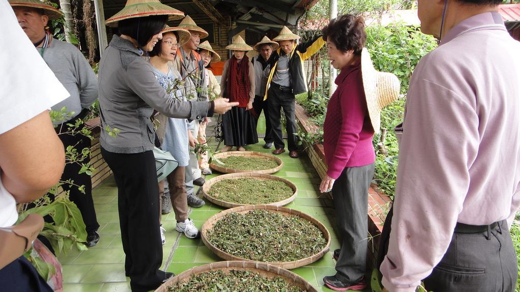 大安藥園休閒農場農場主人向遊客介紹各式草藥