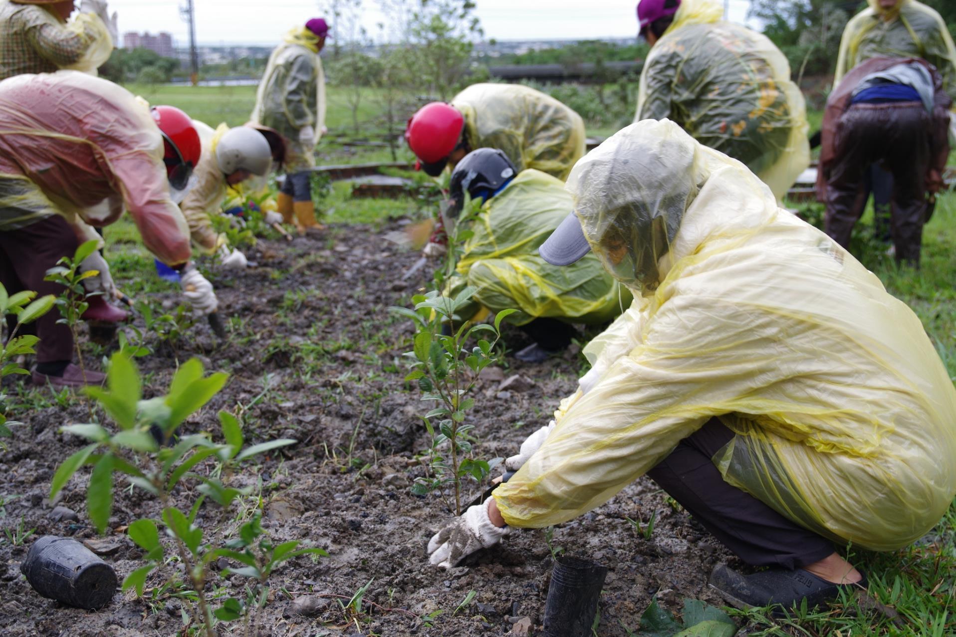 金面溪植樹活動