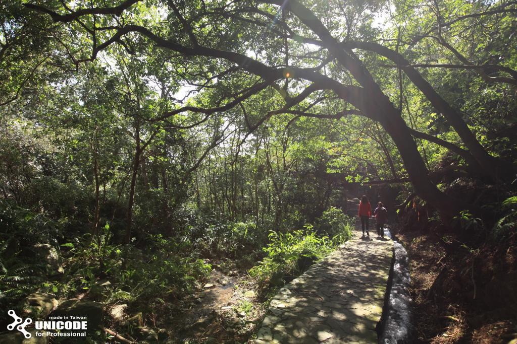 猴洞坑瀑布森林步道