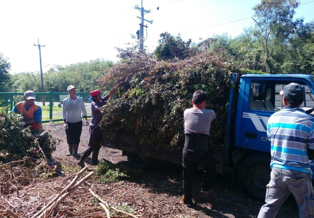 清潔隊處理民眾所繳交的大量樹枝