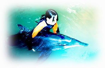 鯨豚急救示範圖
