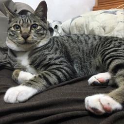 貓名:卡咪