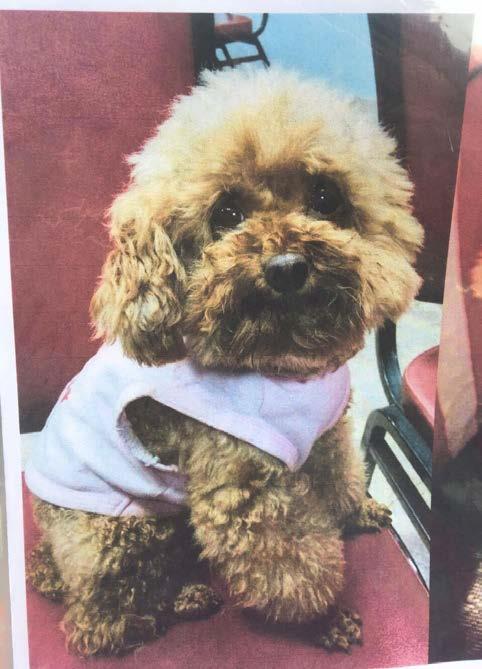 犬名:波吉