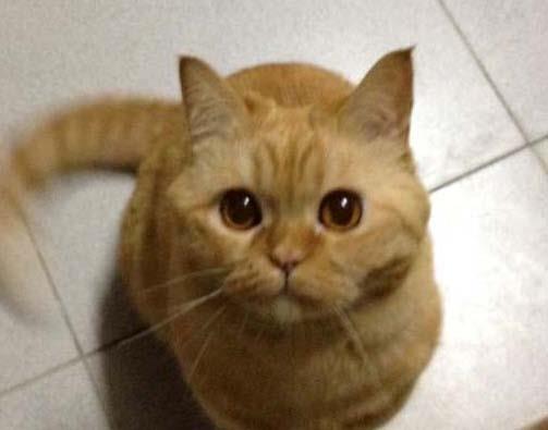 寵物協尋-混種-Domei