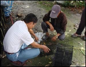 農田野鼠監測前鼠籠準備作業及設置示範