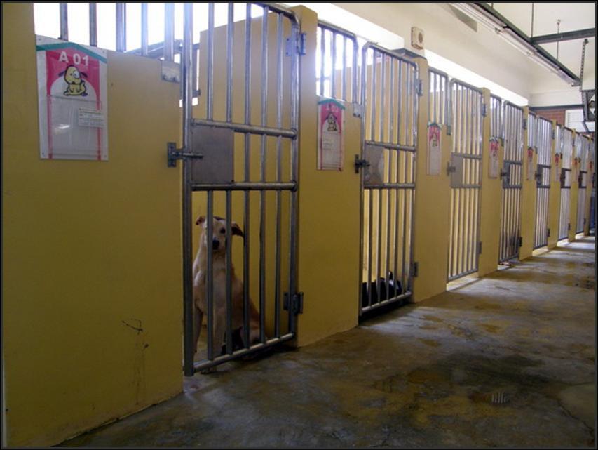 流浪動物中途之家設施維護及改善