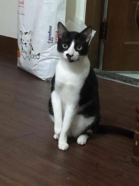 貓名:迪迪