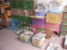 寵物鳥園及相關販賣業者納入衛星定位並加強訪視