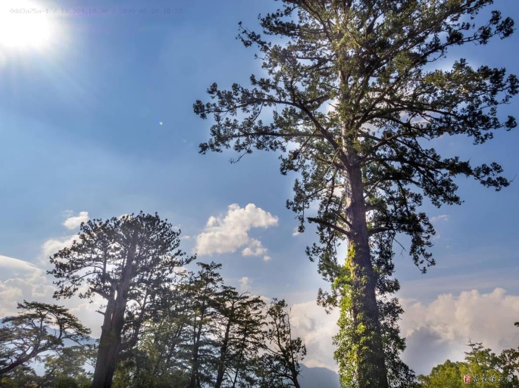 棲蘭山影像3