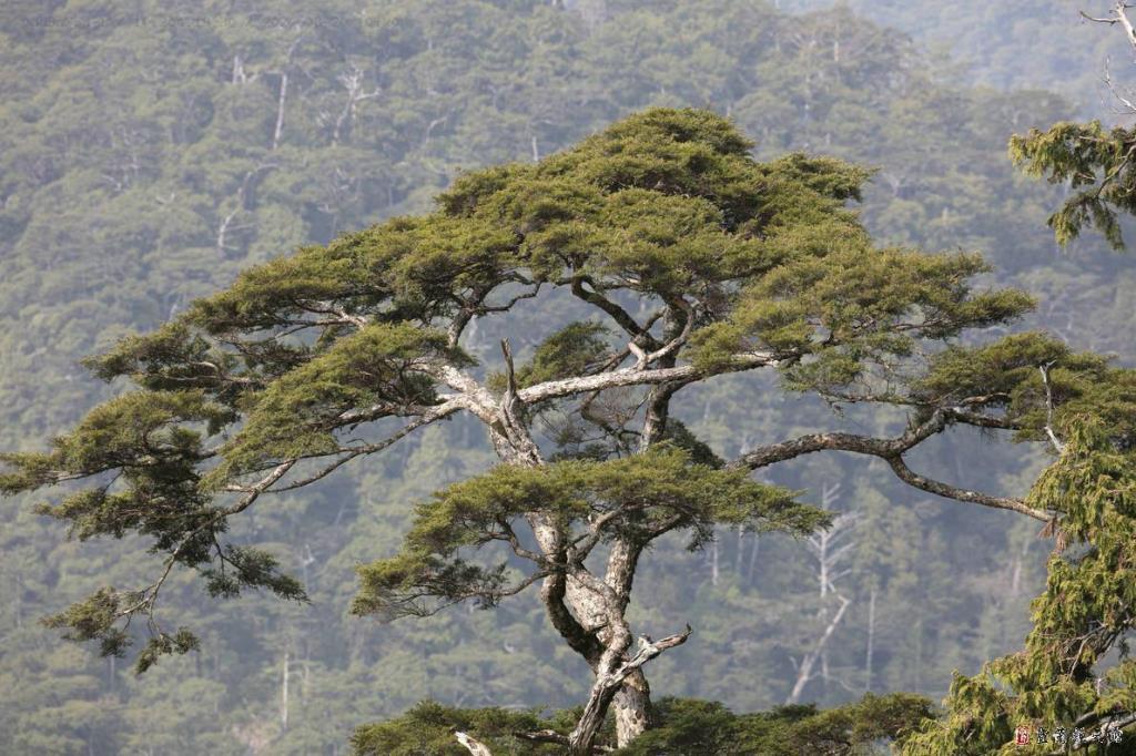 棲蘭山影像4