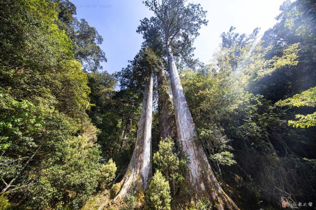 棲蘭山影像1
