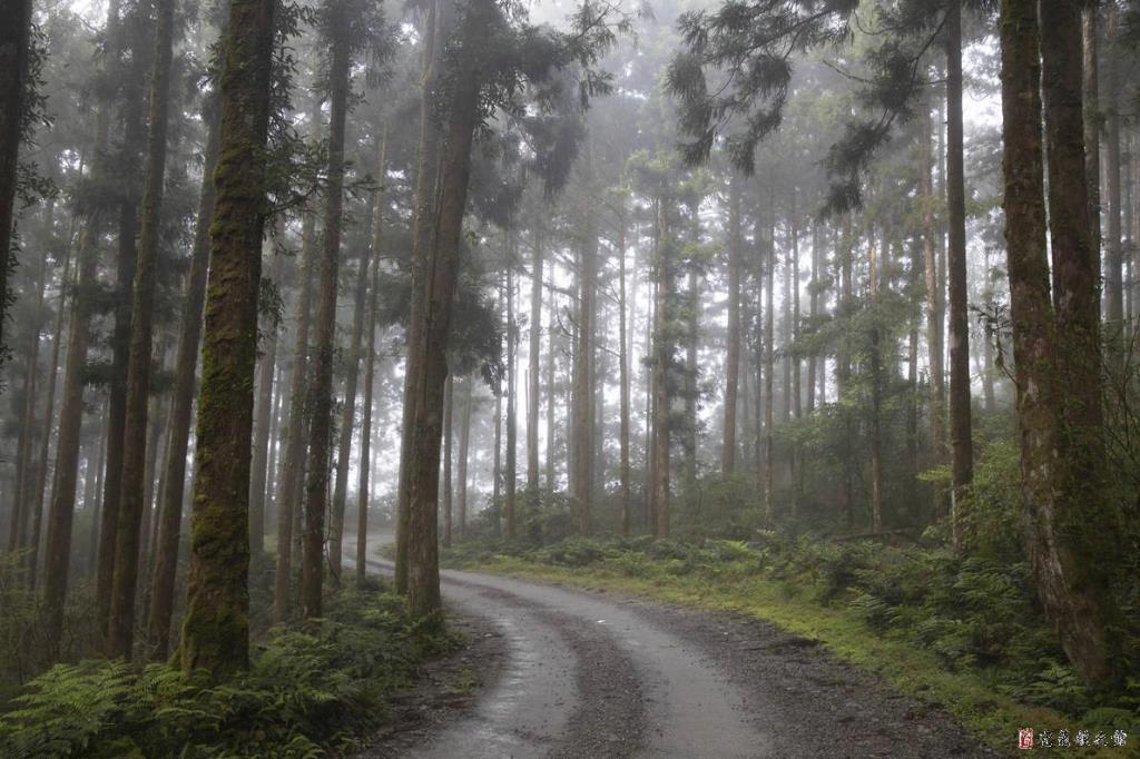 棲蘭山影像2