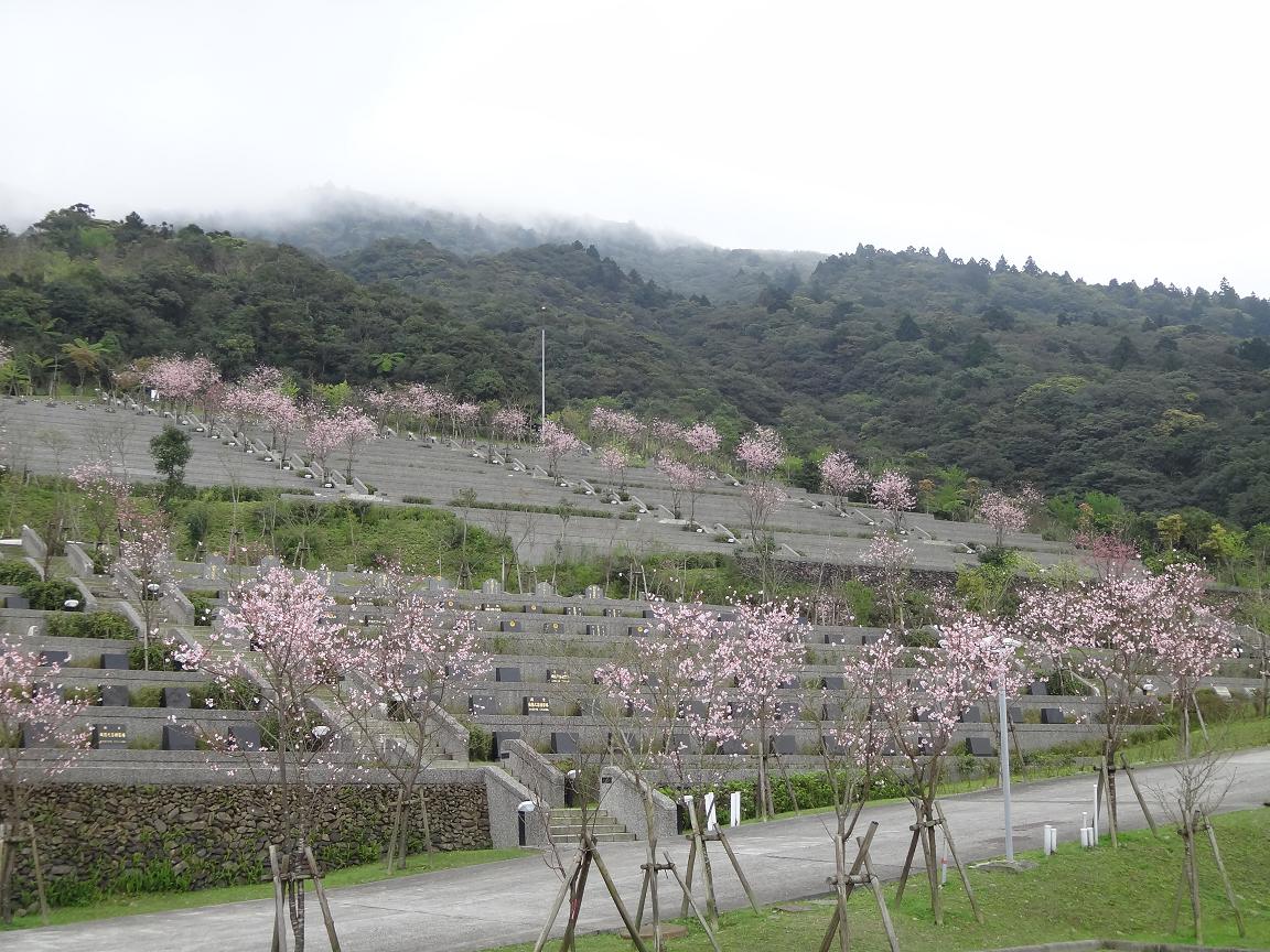 櫻花陵園全景