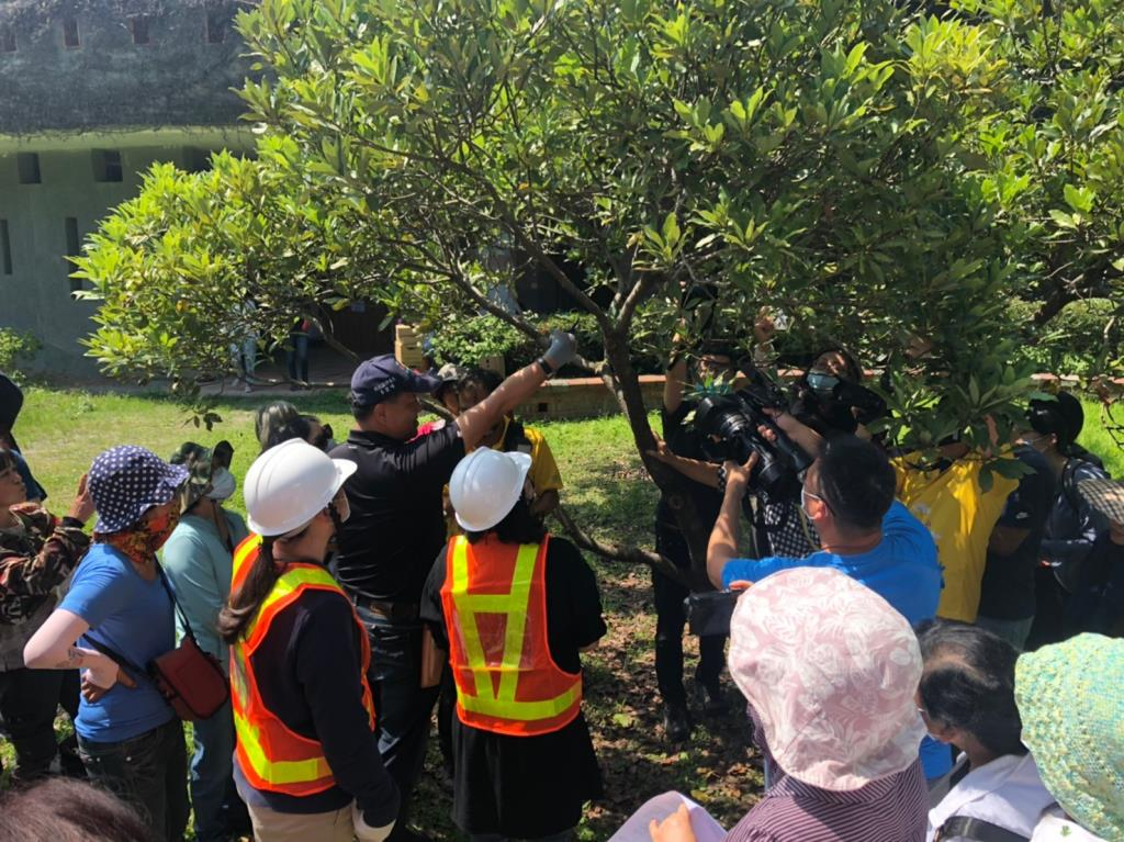 專業講師李碧峰教授實用的樹木修剪原則