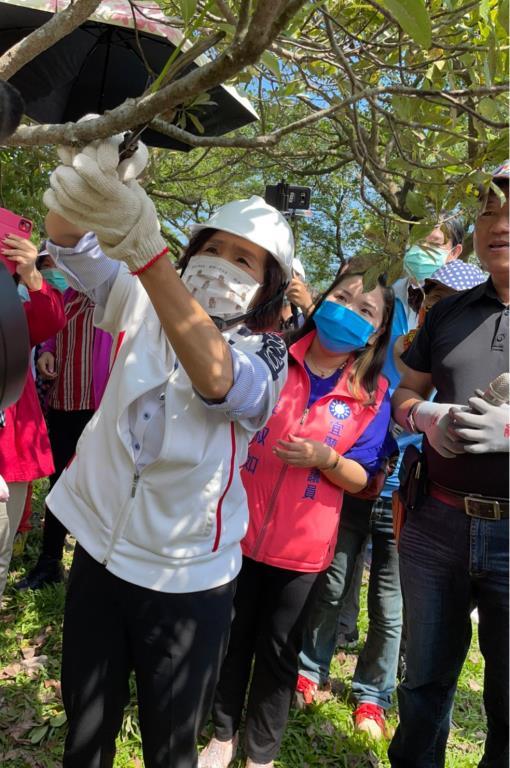 林姿妙縣長親自參與樹木修剪研習女性專班